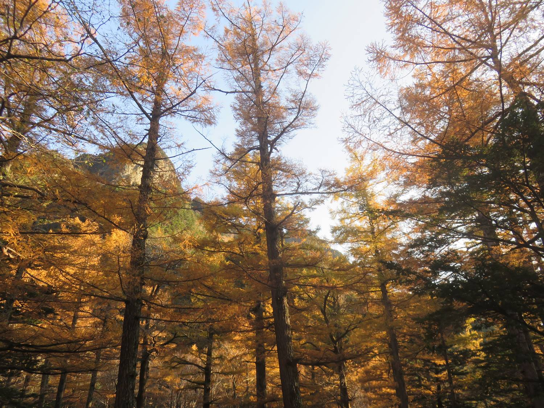 カラマツ林