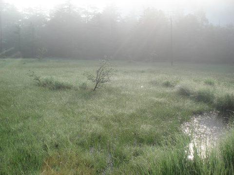 朝露の田代湿原
