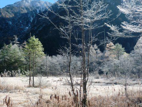 11月の田代湿原