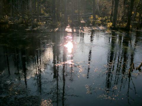 岳沢湿原の朝