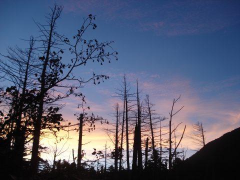 岳沢湿原の朝2