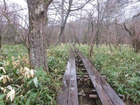 明神池右岸ルートの木道