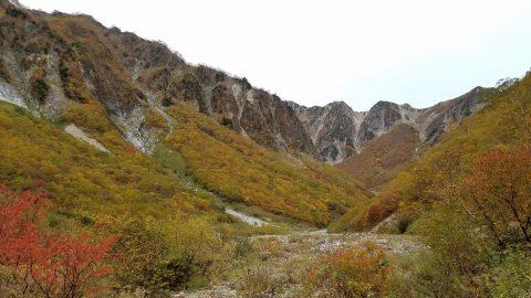 ババ平周辺の黄葉