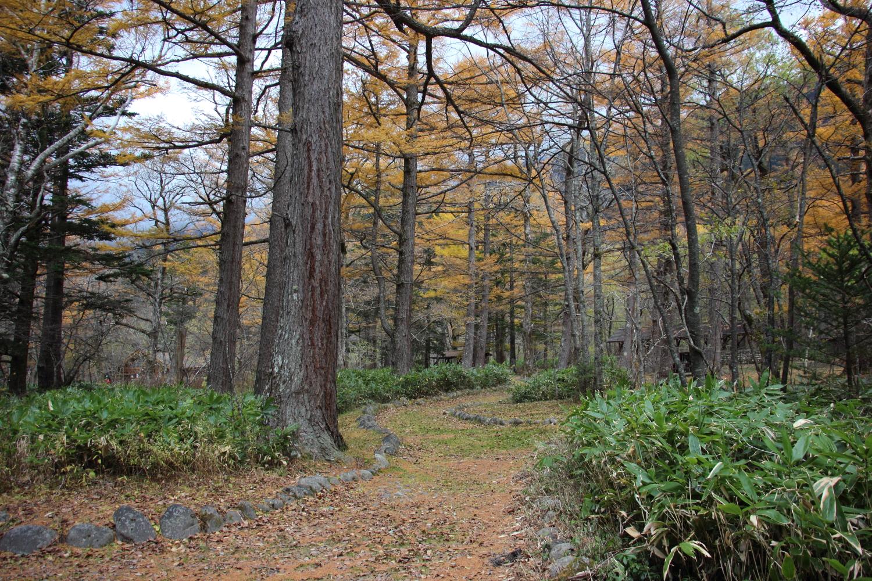 カラマツの落ち葉で黄色くなった小道