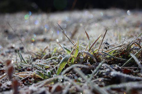 草に付いて輝く霜