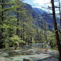 岳沢湿原の景色
