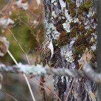 木の幹にいる鳥