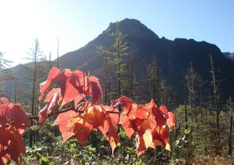 六百山と紅葉