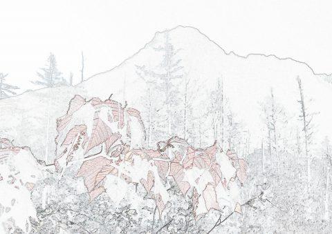 六百山と紅葉塗り絵