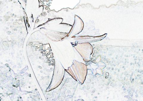 ニッコウキスゲ塗り絵