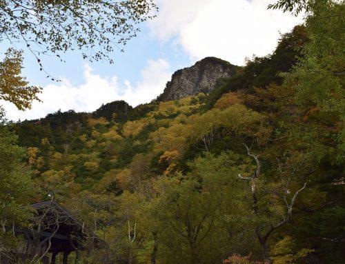 にぎやかな秋の景色