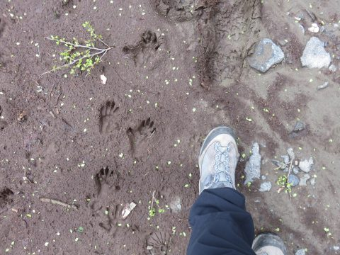サルの足跡大きさ比較