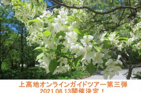 上高地オンラインガイドツアー、第三弾は「満開の小梨&新緑の明神散策」です!