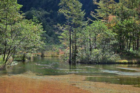 ネイチャーガイドおすすめの絶景:紅葉で秋色に染まる上高地の田代池