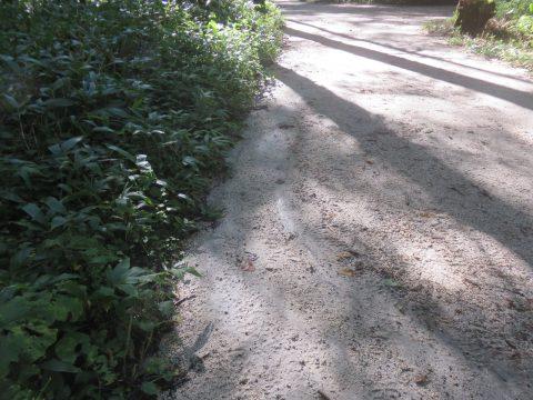 上高地明神左岸遊歩道・水の流れた跡