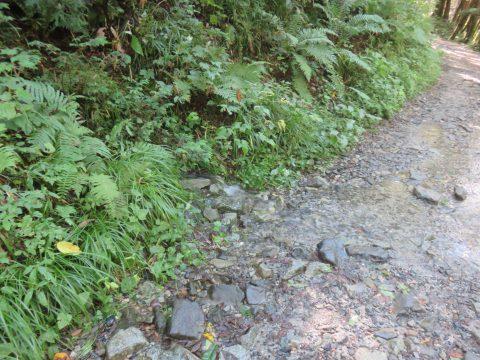 上高地遊歩道沿いの湧き水
