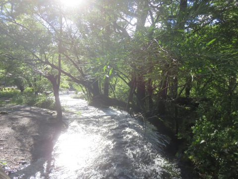 上高地・小梨平キャンプ場の中川