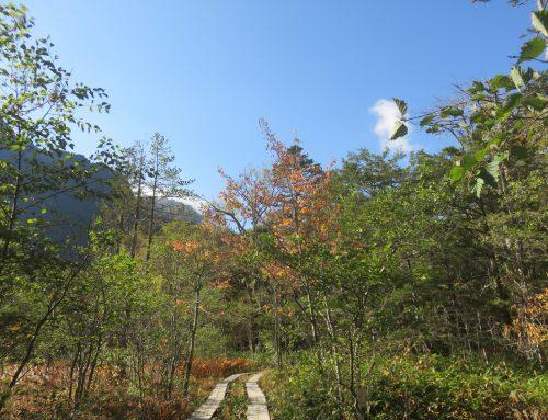 【上高地紅葉情報】岳沢湿原がおすすめ!/オンラインガイドツアーは徳沢の黄葉です