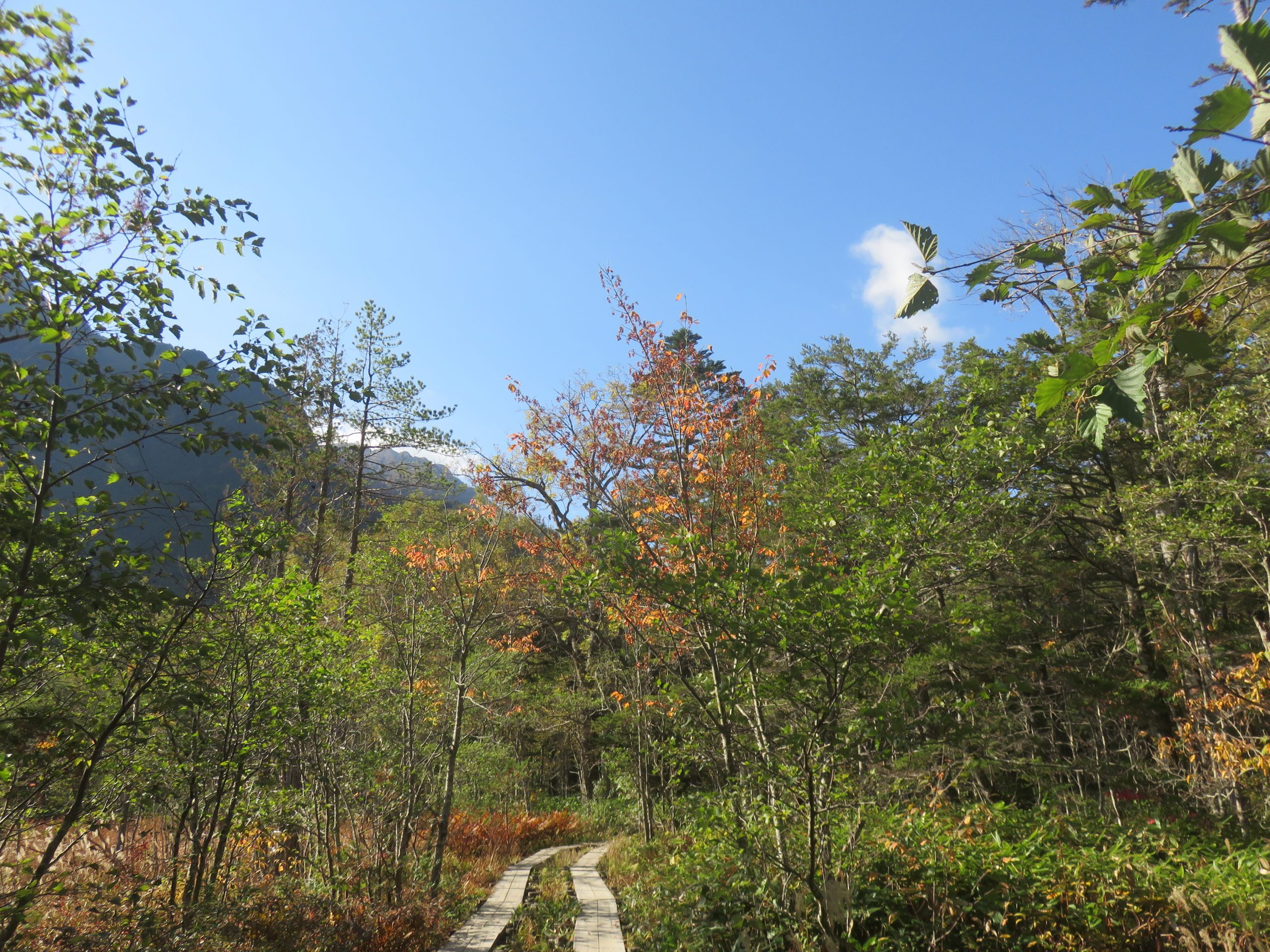 上高地・岳沢湿原