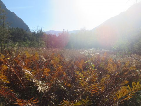 上高地・岳沢湿原の草紅葉